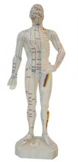 Akupunkturmodell, männlich klein