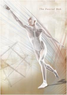 Faszien Poster II, 85x60cm