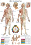 Lehrtafel Körperakupunktur, 70x100cm