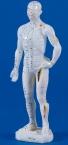 Chinesische Akupunkturfigur, männlich 26 cm