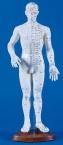 Chinesische Akupunkturfigur, männlich 50cm