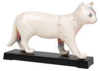 Akupunktur-Katzen-Modell 19cm